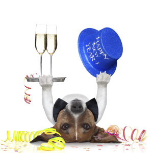 new years eve dog