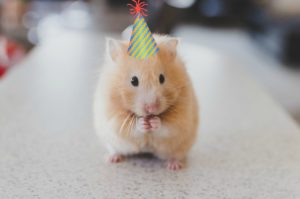 hamster-birthday-hat